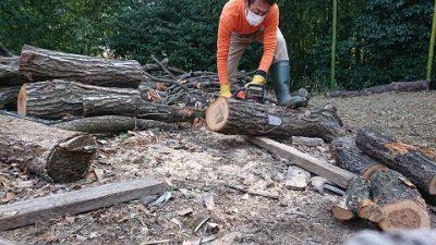 ナラの木伐採(2回目)~薪~